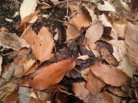 落ち葉を見つめてみる