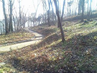 朝日を受けて木々の影が長く伸びています
