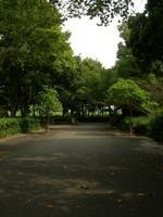 公園内の道