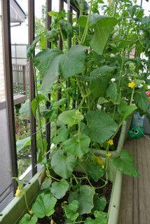 0610菜園