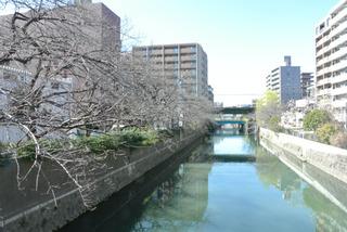 3月8日の川沿い