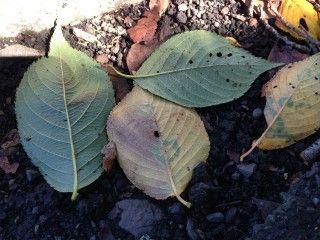 色づき始めた落ち葉