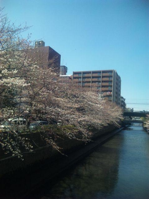 2010.3.30他の桜