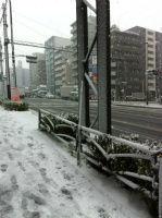 横浜の積雪