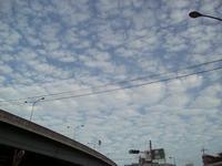 うろこ雲広がる